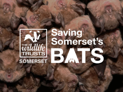 Saving Somerset's Bats
